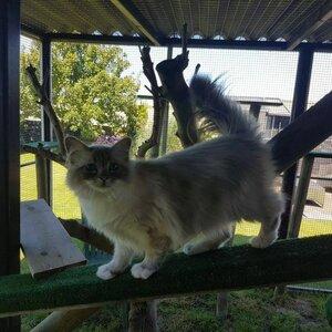 Kattenpension Wieringerwaard image 1