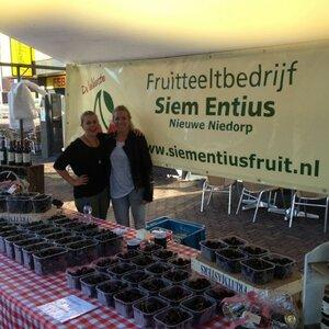 Fruitteeltbedrijf Siem Entius image 3
