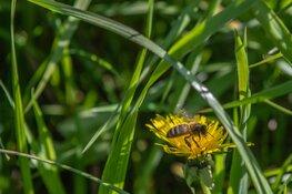 Provincie investeert € 196 miljoen in biodiversiteit