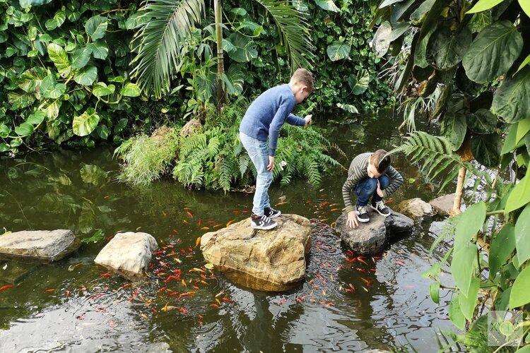 Vlindertuin Vlindorado vanaf Valentijnsdag geopend