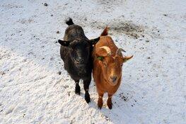 Kinderboerderij Jong leven staat in het teken van kerst