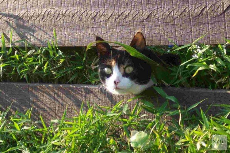 Dierenartsen in regio Alkmaar krijgen financiële steun voor medische noodhulp dieren